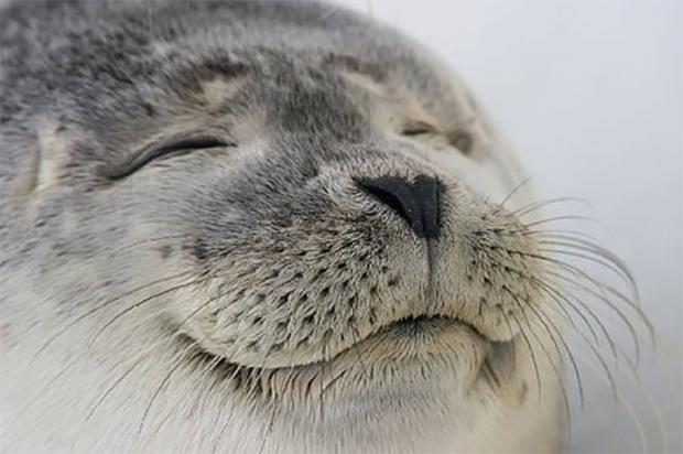 satisfied-seal